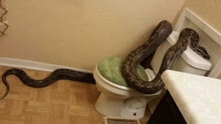 snake proofing python on toilet