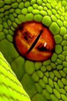 november snake catcher